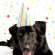 Black Dog Wearing Striped Party Hat — Stock Photo #29042085