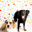 Black and Brown Dogs Wearing Striped Party Hats — Stock Photo #29042087
