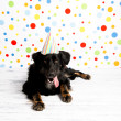 Stock Photo: Black Dog Wearing Striped Party Hat