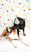 Black and Brown Dogs Wearing Striped Party Hats — Stock Photo