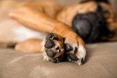 Closeup of Dog's Paws — Stock Photo