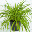 Plant in Black Pot — Stock Photo #29075811
