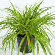 Plant in Black Pot — Stock Photo