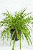 Plant in Black Pot — Stock Photo