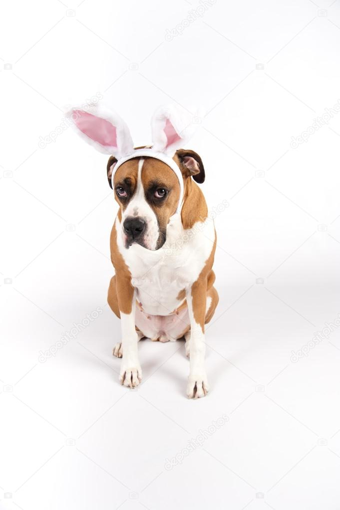 59 best images about lets go ! on Pinterest   A bunny ...  Boxer Dogs With Bunnies