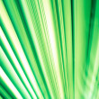 Abstract Photo with Bright Green and White Angled Lines — Stock Photo