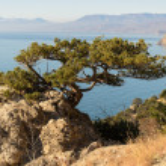 Tree — Stock Photo #39467549