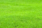 Summer lawn — Stock Photo
