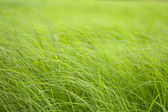 Summer grass — Stock Photo
