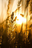 Evening autumn sun — Stock Photo
