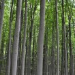 Stock Photo: Trees in forest
