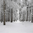 Road in a snowy forest — Stock Photo