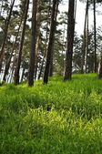 Green grass in forest — Stock Photo