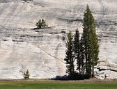 Yosemte milli parkı içinde ağaç — Stok fotoğraf