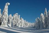 Paisaje nevado — Foto de Stock