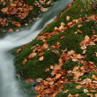 Waterfall in autumn — Stock Photo #32789241