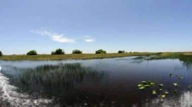 Everglades National Park from airboat — Stockvideo