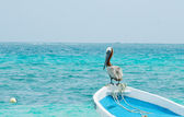 Pelican perched on a boat — Stock Photo