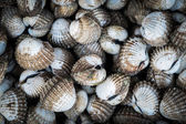 Stack of sea cockle — Stock Photo