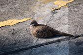 Injured bird on a street — Stockfoto