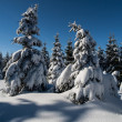 Spruce forest in winter time — Stock Photo #29691789