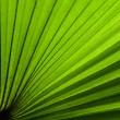 Green fan — Stock Photo