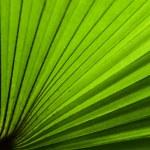Green fan — Stock Photo