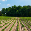 Field with furrows — Stock Photo