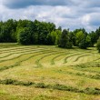 Mowed field — Stock Photo