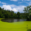 Green pond — Stock Photo