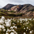 Landmannalaugar — Stock Photo #29703525