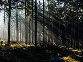 Rays of light — Stock fotografie