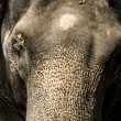 Elephant — Stock Photo #30057943