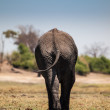 Elephant leaving — Stock Photo