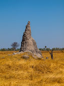 Termite hill in Okavango region — Stock Photo