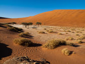 Dead acacia trees and red dunes of Namib desert — Stock Photo