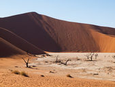 Dead acacia trees and red dunes of Namib desert — Foto Stock