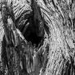 Knot of old dry tree — Stock Photo #37908799