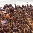 Stock Photo: Brown Fur Seal colony (Arctocephalus pusillus)