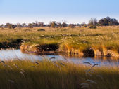 Landscape at Okavango river — Stock Photo