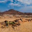Landscape at Petrified forest with welwitschia plant — Stock Photo #38193143