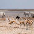 Many animals at waterhole — Stock Photo #39768941