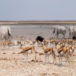 Stock Photo: Many animals at waterhole