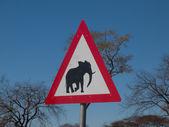 Beware of elephants — ストック写真