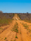 Endless sandy road of Chobe — Stock Photo