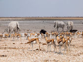 Many animals at waterhole — Stock Photo