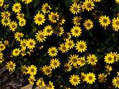 Gelbe blüten — Stockfoto