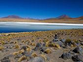 Blue lagoon of Altiplano in Bolivia — Stock Photo