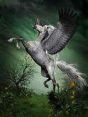 Dapple Grey Pegasus — Stock Photo
