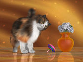 Bella the House Cat — Stock Photo